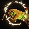 Цирки в Ростове-на-Дону