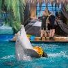 Дельфинарии, океанариумы в Ростове-на-Дону